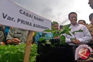 Kementan Buka 40 Hektare Ladang Cabai Manokwari