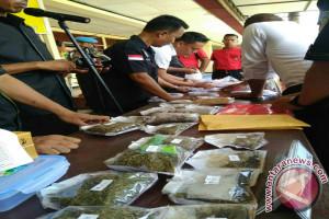 Mahasiswa Sorong Tertangkap Edarkan Ganja di Manokwari