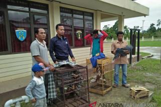 Warga Bintuni serahkan enam satwa dilindungi kepada polisi