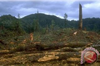 Komitmen konservasi Papua-Papua Barat dinilai belum nampak