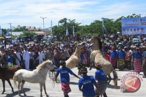 Atraksi Perkelahian Kuda Dipertontonkan Usai HUT Sultra