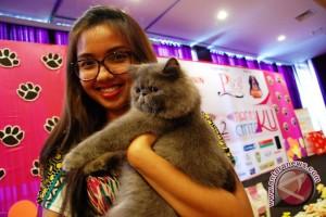 kucing berjenis persian exotic short hair menunjukkan k