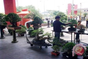 Pencinta bonsai pameran di mal PTC