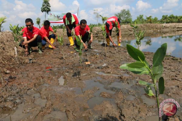 Pertamina tanam 10 ribu bibit pohon mangrove