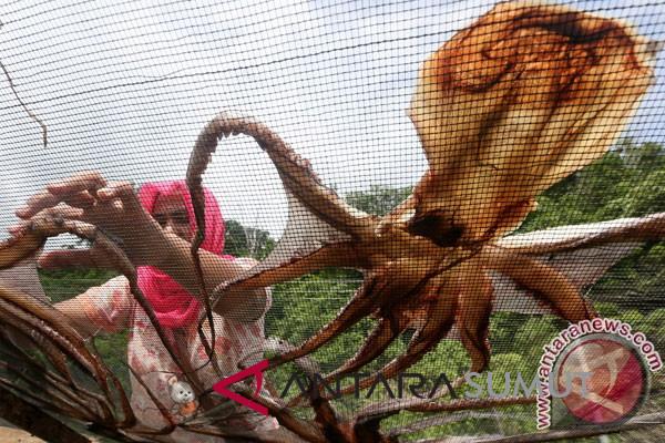 Tiongkok minati gurita Indonesia