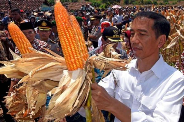 Presiden panen jagung