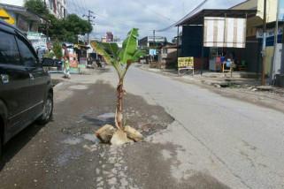 Heboh, pohon pisang di tengah jalan