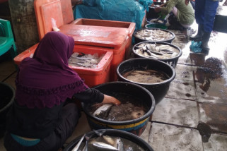 Harga ikan melonjak naik di Sibolga