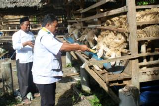 Baznas Langkat targetkan pengembangan domba 1.000 ekor