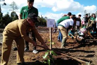 20.000 bibit pohon untuk hutan Tele Samosir
