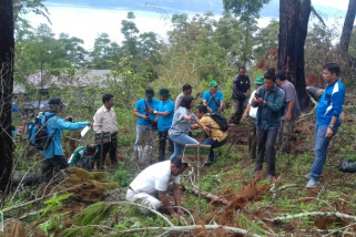 Bukit kritis Danau Toba ditanami pohon